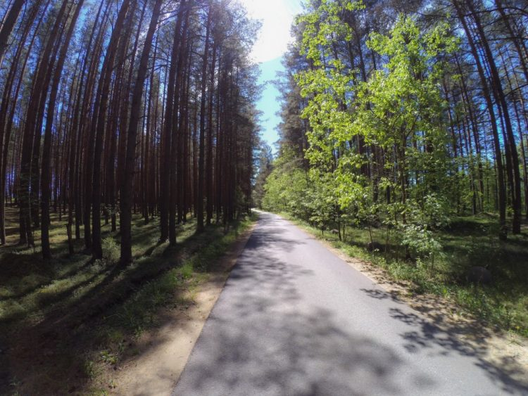Lenin's trail - Tarkhovka - Dibuny - cycle and hiking route